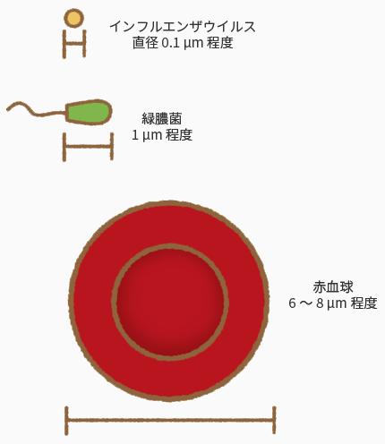ウィルスと細菌と赤血球の図解。